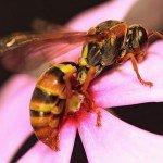 Что делать если ребенка укусила оса или пчела