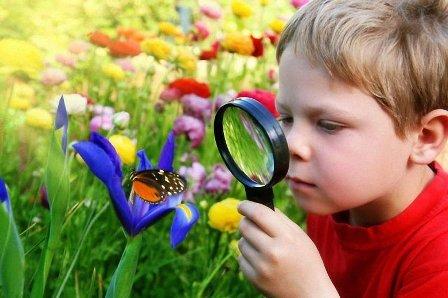Мальчик рассматривает бабочку, наблюдение за насекомыми