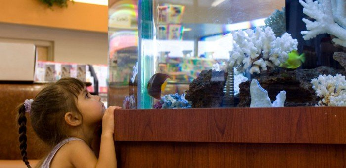 девочка наблюдается за рыбкой, аквариум для ребенка