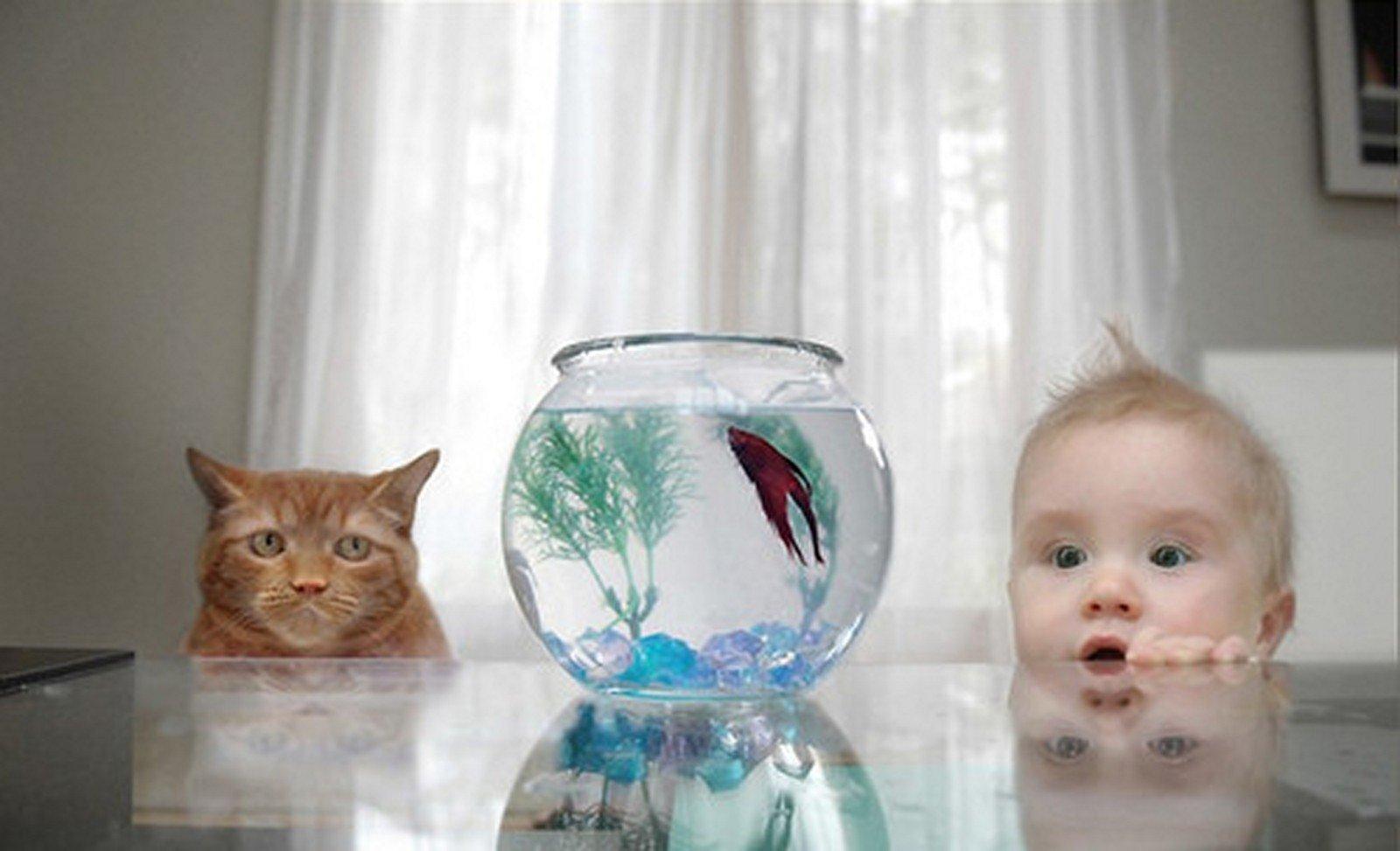 ребенок смотрит на аквариум, каких рыбок купить ребенку