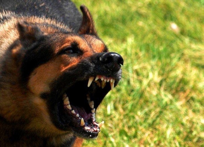 злая собака, первая помощь при укусе собаки