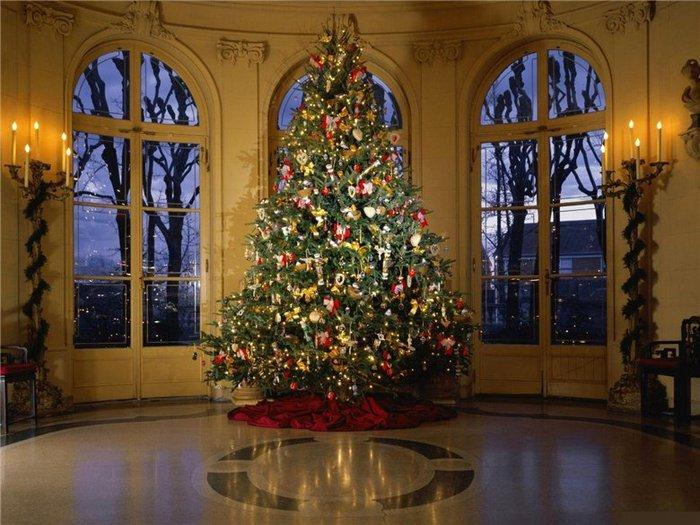 красивая елка, какая елка лучше
