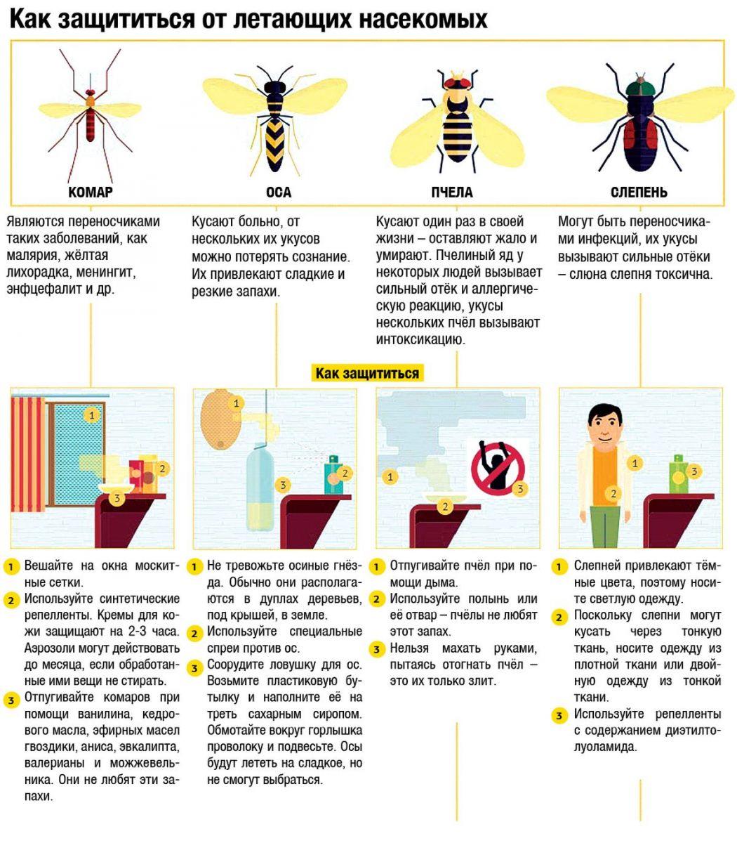 инфографика защита от летающих насекомых
