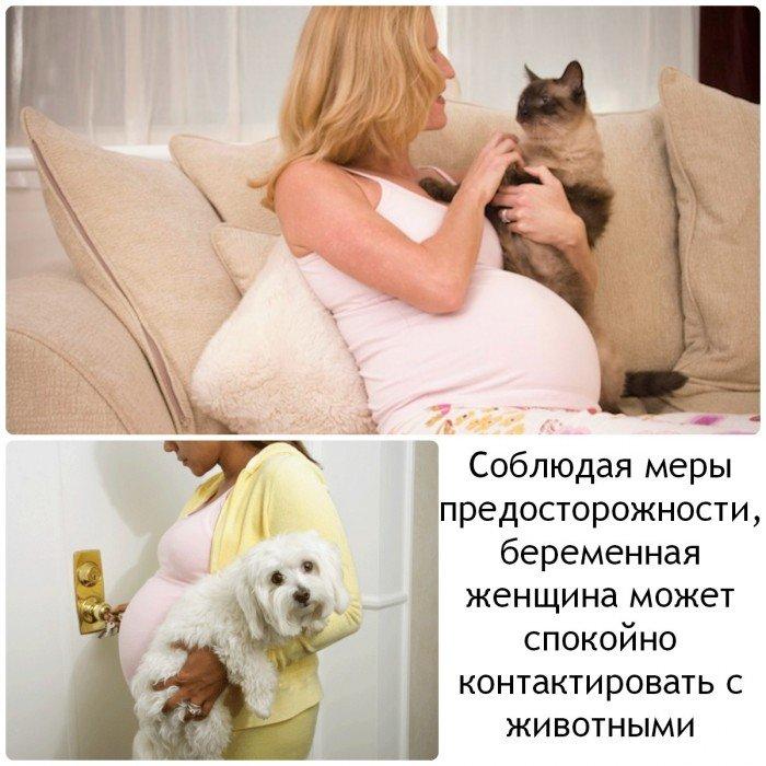 беременная женщина с домашними питомцами