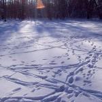 Гуляем по зимнему лесу