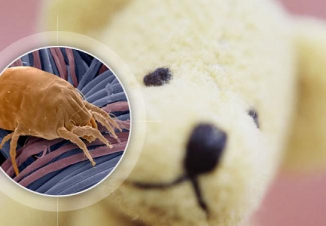 В мягких игрушках могут обитать пылевые клещи