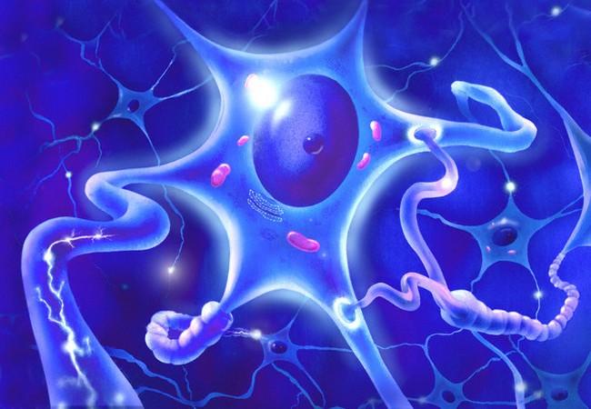 При переохлаждении в клетках замедляются химические реакции