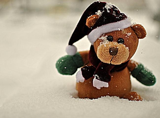 Плюшевый мишка на снегу