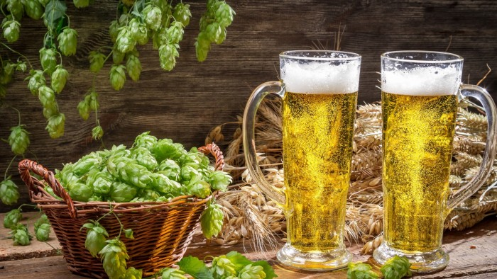 Хмель в безалкогольном пиве
