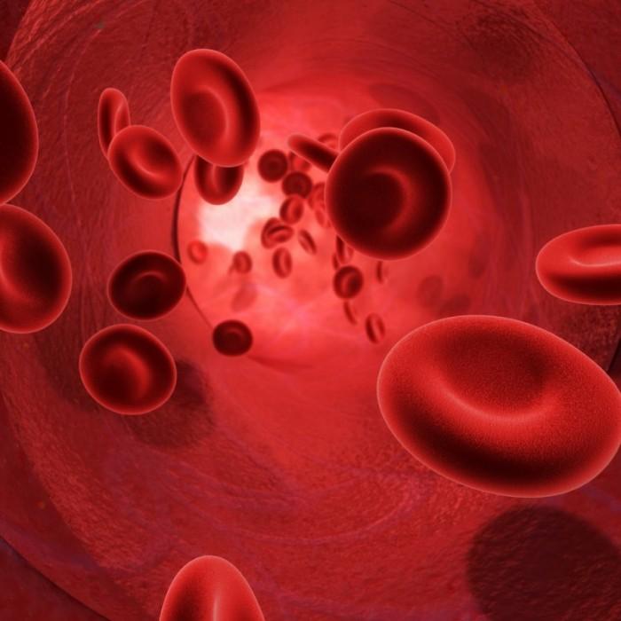 Вид крови под микроскопом
