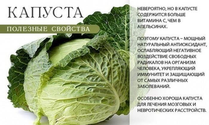 полезные свойств капусты