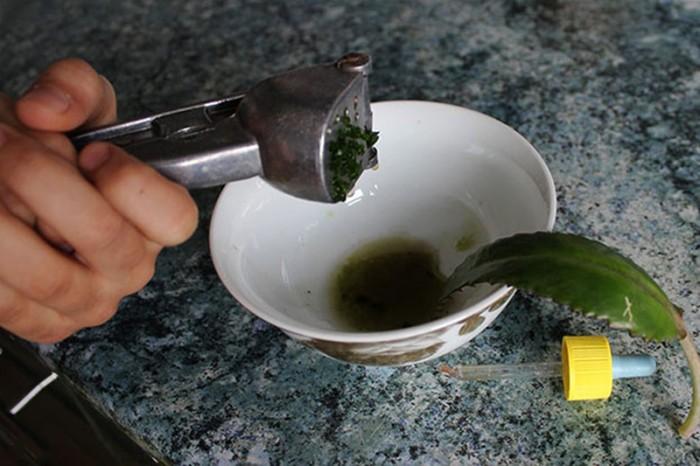 Приготовление лекартсва с каланхоэ