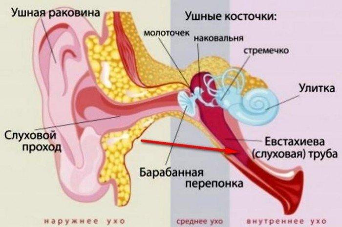 Причины развития отита у грудничков и новорождённых