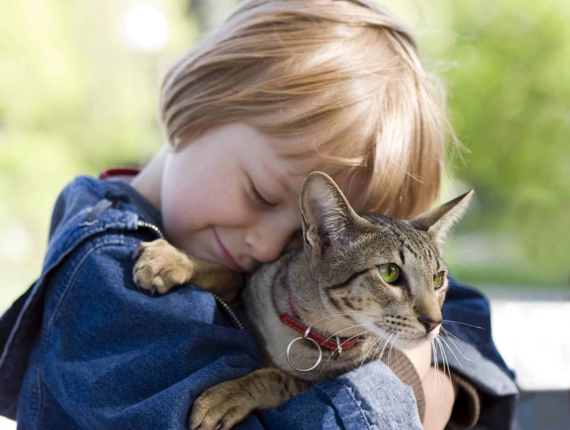как проявляется аллергия на животных у взрослого