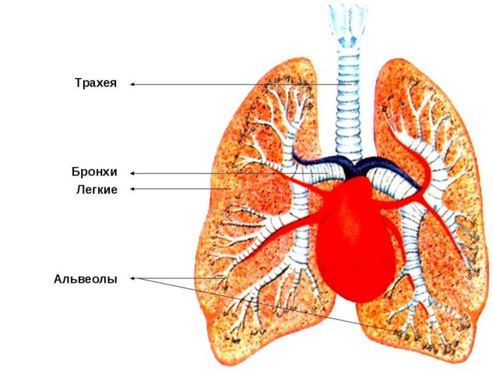 Народные средства для лечения ушных болезней