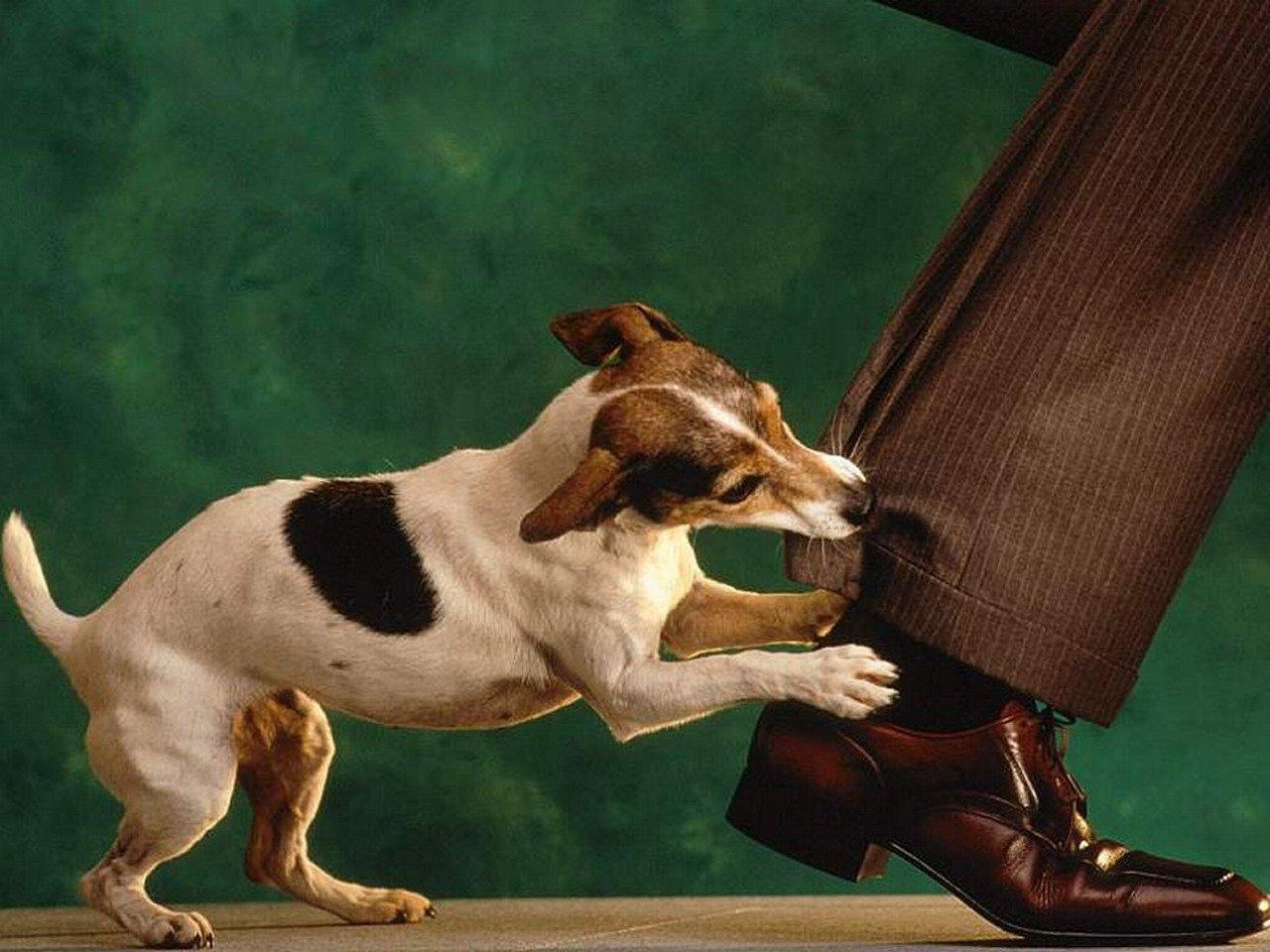 мозг Если покусала собака какую ответственность несет хозяин много работы