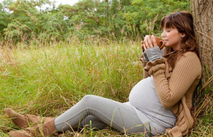Отвар из листьев жимолости при беременности