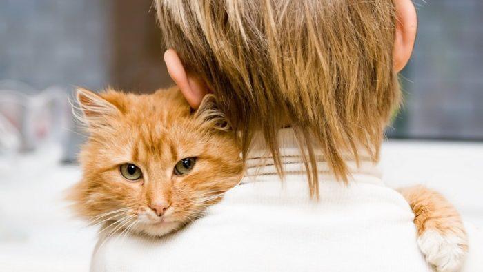 Кот обнимает мальчика