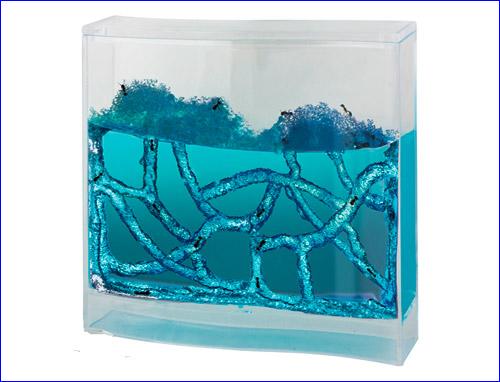 Голубой аквариум с муравьями