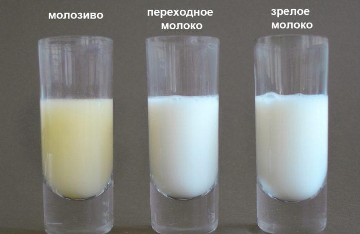 В трёх стаканчиках: молозиво, переходное молоко и позднее молоко