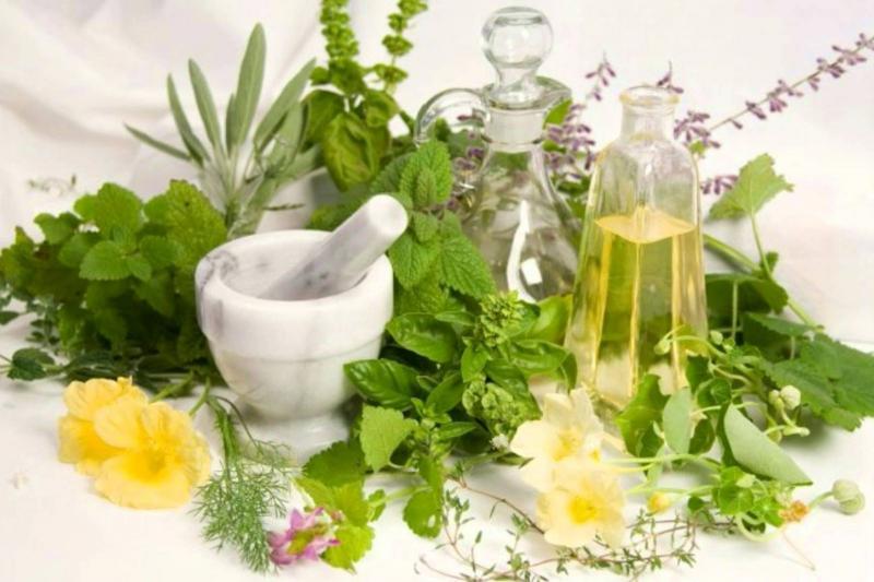Растения для повышения лактации и их применение