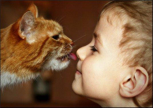 Рыжий кот лижет нос мальчика