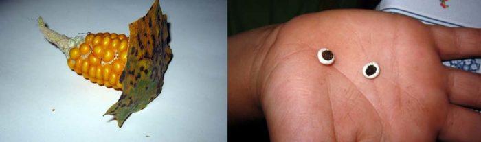 Лист, прикреплённый к туловищу; глазки на ладошке из пластилина и чёрного перца