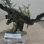 Динозавр из сучка дерева и хвойных веточек