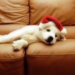 щенок на новый год