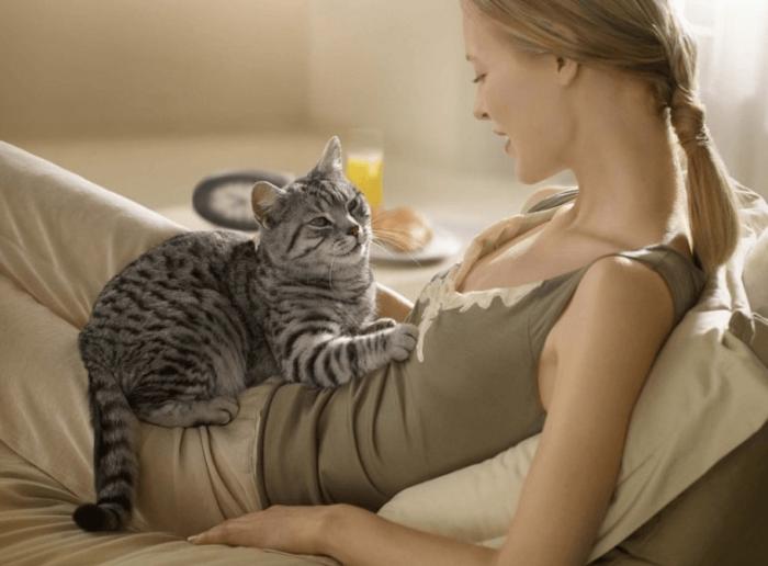 кот живот беременная