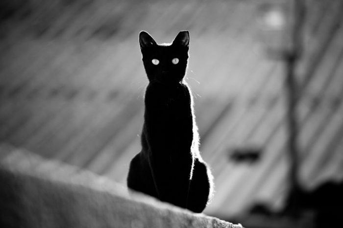 черная кошка и женщина