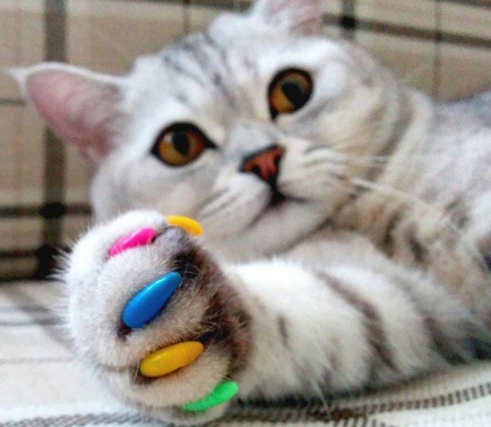 кошка цветные когти