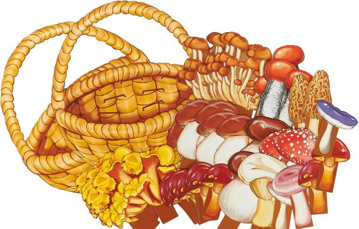 Корзина, рядом разные грибы