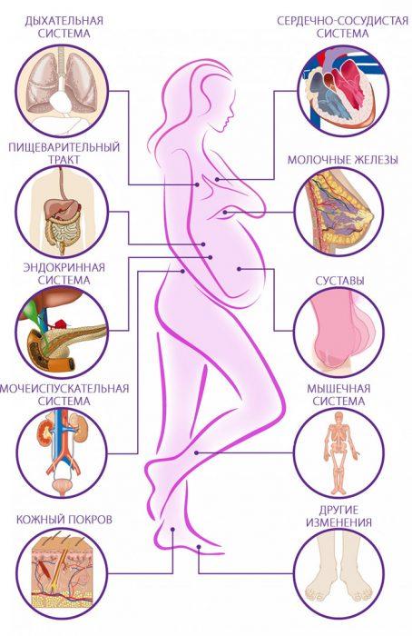 беременная женщина изменения