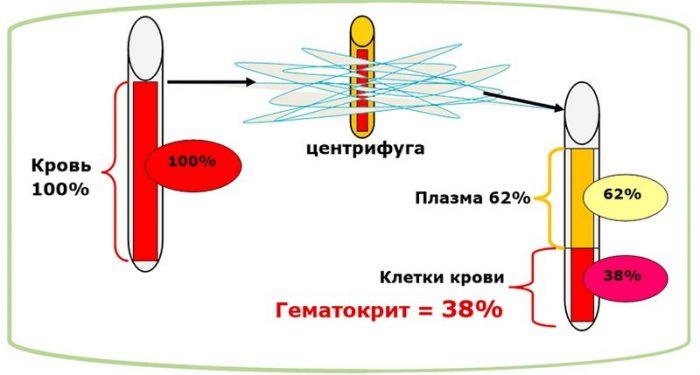 Определение гематокрита