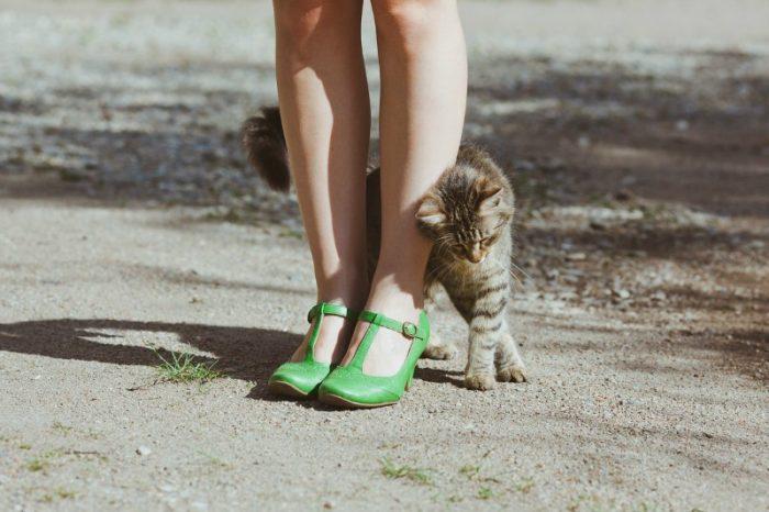 Котёнок трётся о женскую ногу