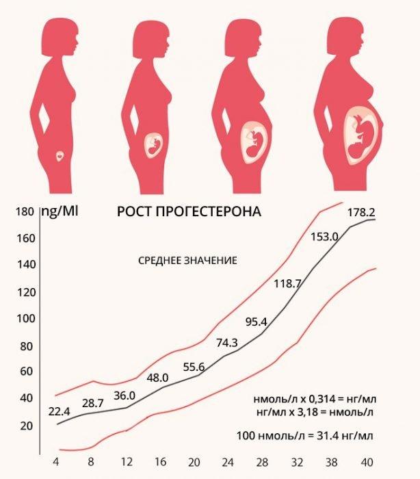 График роста прогестерона в организме женщины при беременности