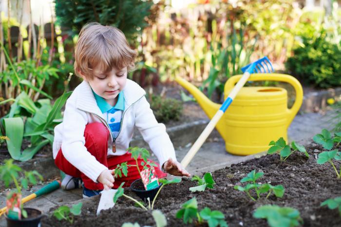 Ребёнок садит помидор на грядке
