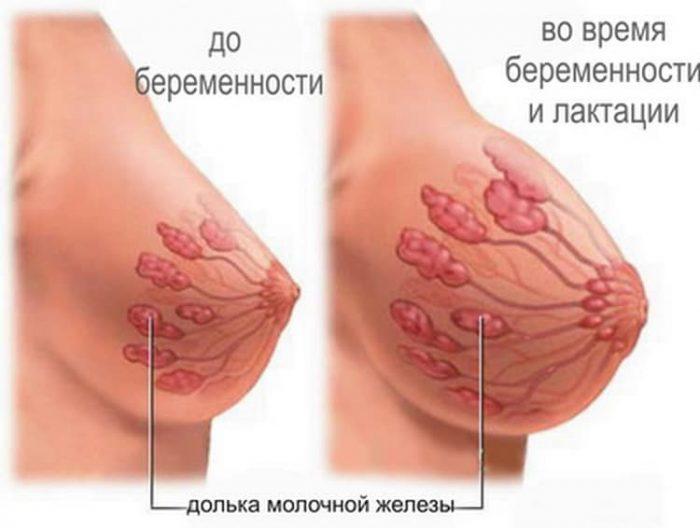 грудь до и во время беременности, лактации