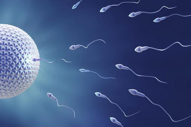 Сперматозоиды приближаются к яйцеклетке