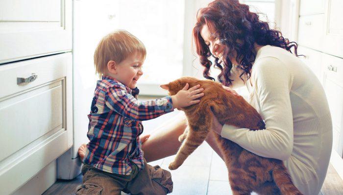 Женщина держит кота, которого гладит мальчик