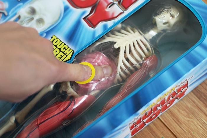 Игрушка с анатомическими подробностями