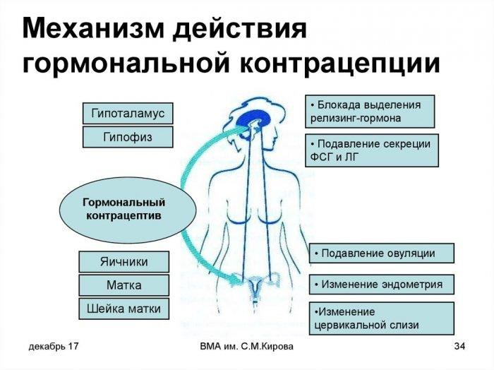 Схема механизма действия гормональной контрацепции