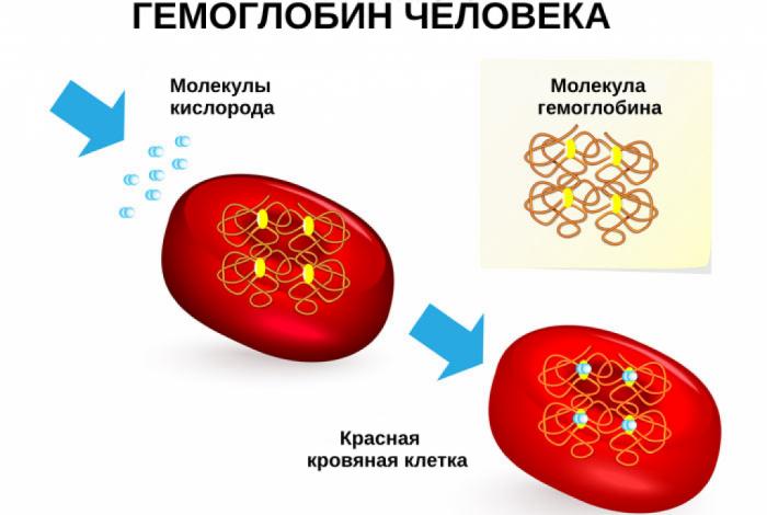 Молекулы кислорода и гемоглобин в клетке крови