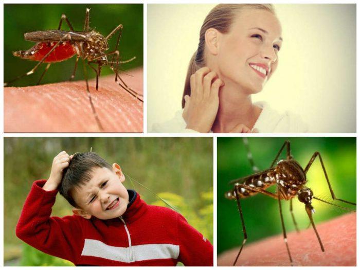 Мальчик чешет голову, девушка — шею; комар вонзается в кожу человека