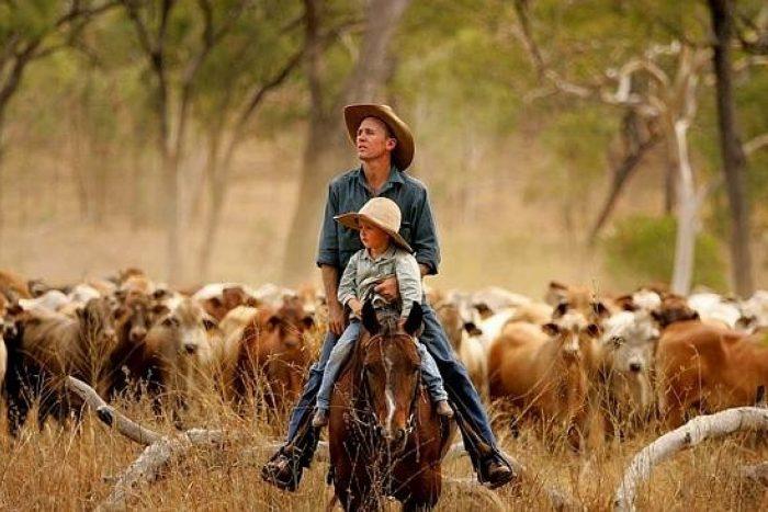 Ребёнок с мужчиной едут на лошади перед стадом коров