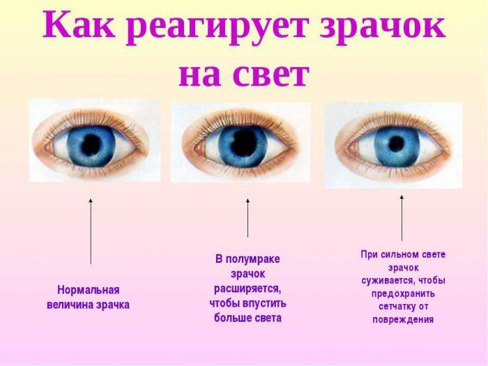 Размеры зрачка при свете разной интенсивности (нормальный, расширенный, суженный)