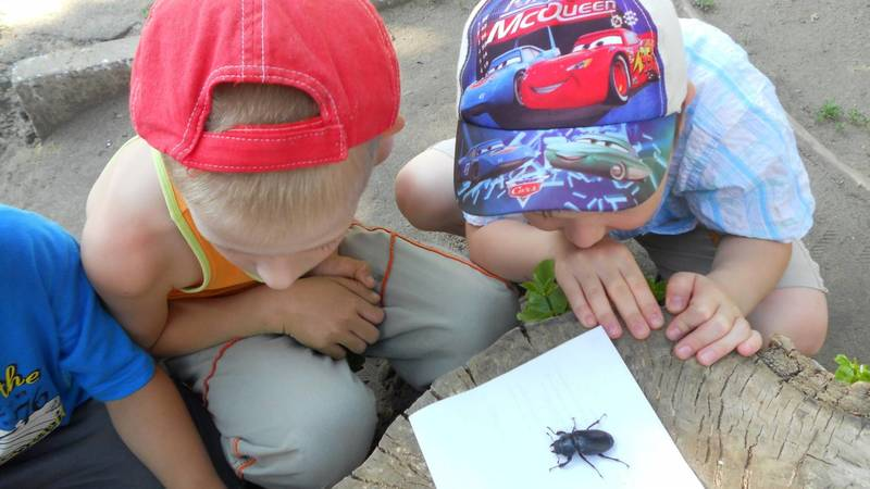 Ребёнок давит насекомых — что из такого вырастет?