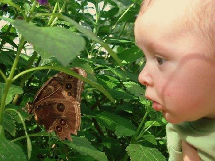 Малыш рассматривает бабочку