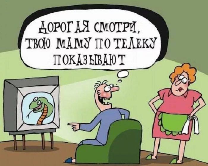 Муж показывает жене змею по телевизору и говорит, что это тёща